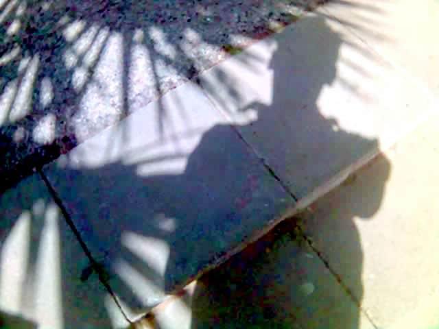 26 03 05 0949 - Между Сциллой и Харибдой - семинар В.Баскакова