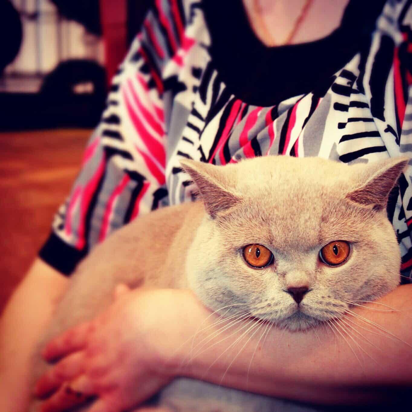 Чья-то кошка в мыслях о сосиске