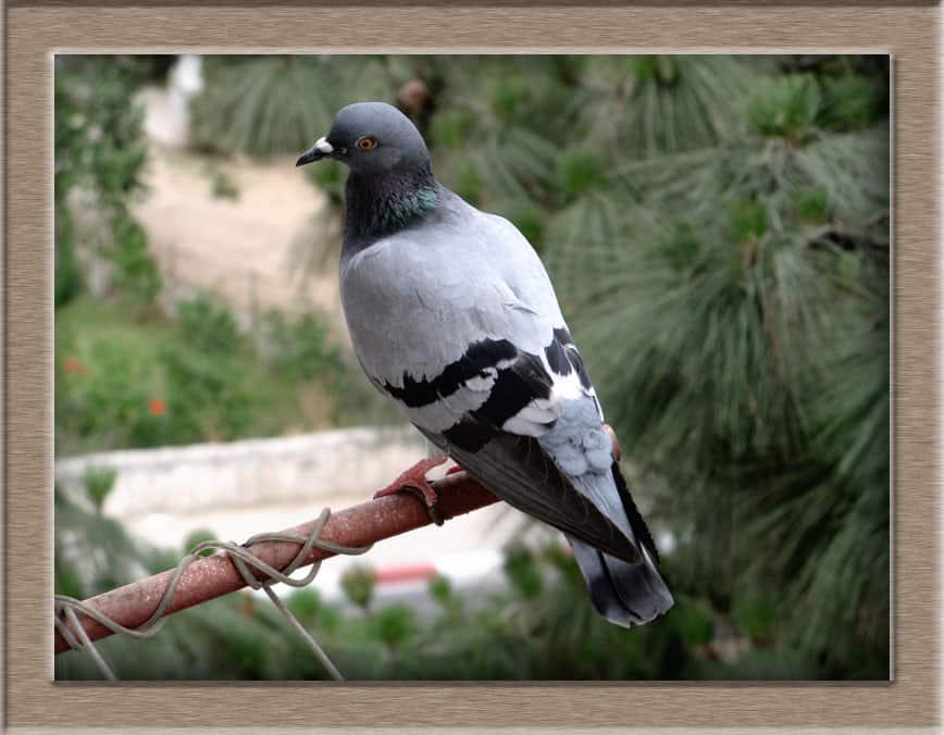 img 0192 lj - В орнитологи что ли пойти