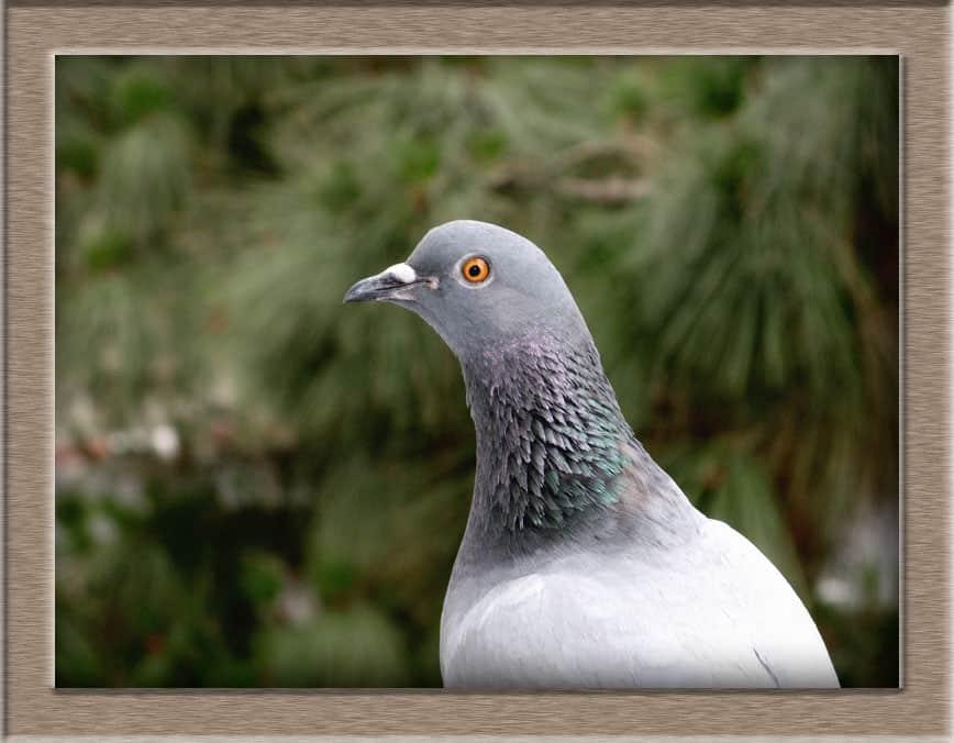 img 0193 lj - В орнитологи что ли пойти
