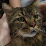 10967 original 150x150 - Выставка кошек 2010