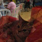 11580 original 150x150 - Выставка кошек 2010