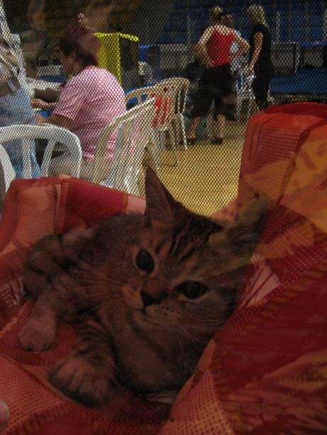 11580 original - Выставка кошек 2010