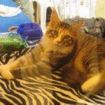 12413 original 150x150 - Выставка кошек 2010