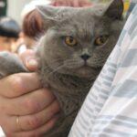 12774 original 150x150 - Выставка кошек 2010