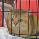 14076 original 150x150 - Выставка кошек 2010
