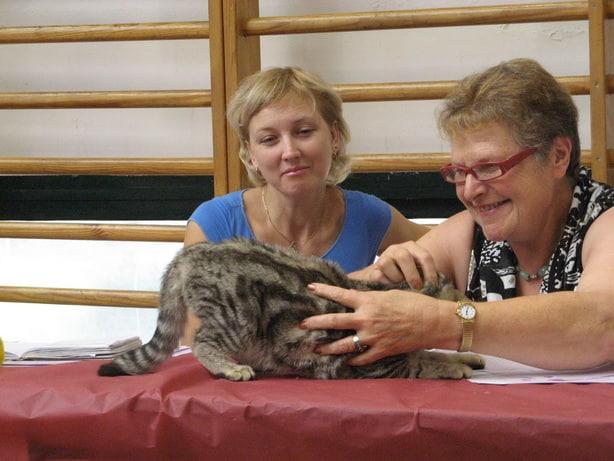 15086 original - Выставка кошек 2010