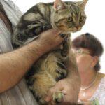 15135 original 150x150 - Выставка кошек 2010