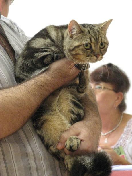 15135 original - Выставка кошек 2010