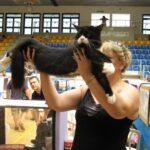15611 original 150x150 - Выставка кошек 2010