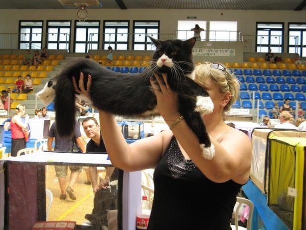 15611 original - Выставка кошек 2010
