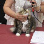 15716 original 150x150 - Выставка кошек 2010