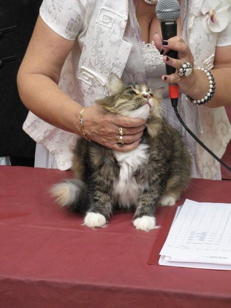 15716 original - Выставка кошек 2010