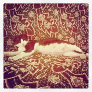 IMG 20120528 132635 300x300 - Культурный шок кошки