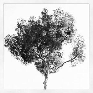 Дерево за окном