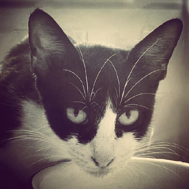 Кошка Пуча