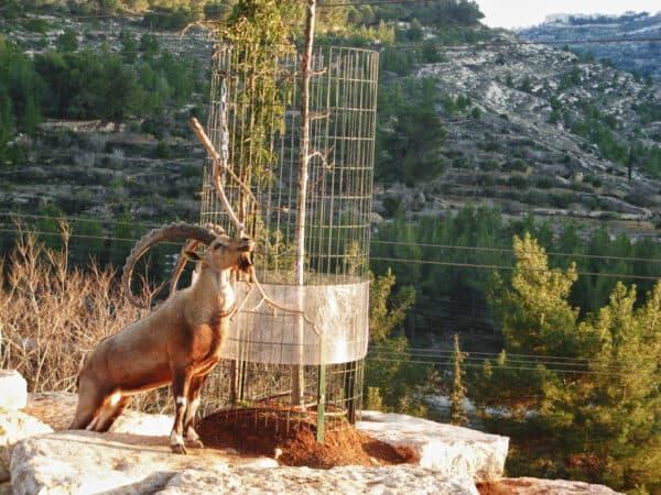 img 4327 lj1 600x450 - Еще из Иерусалимского зоопарка