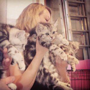 Эти пушистые котята находятся тут, чтобы привлечь ваше внимание к статье.