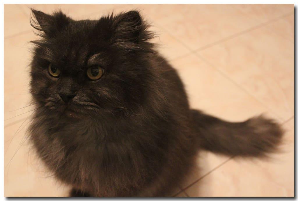 6989094078 301cc0082f b - Шуки - кот жены
