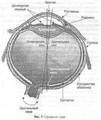 1 - Зрение. День 1.2 - устройство глаза