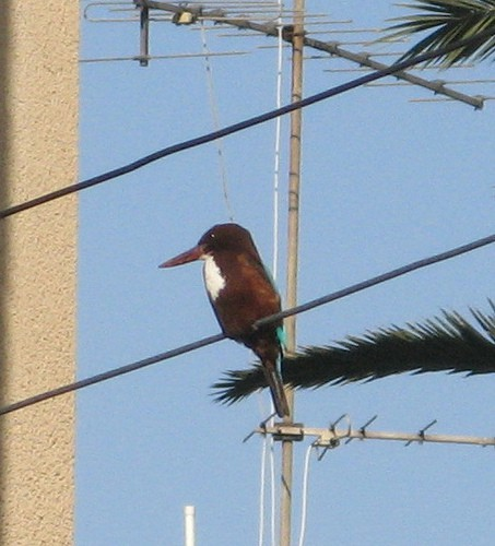 6822550753 b242813449 - А что это за птица такая?