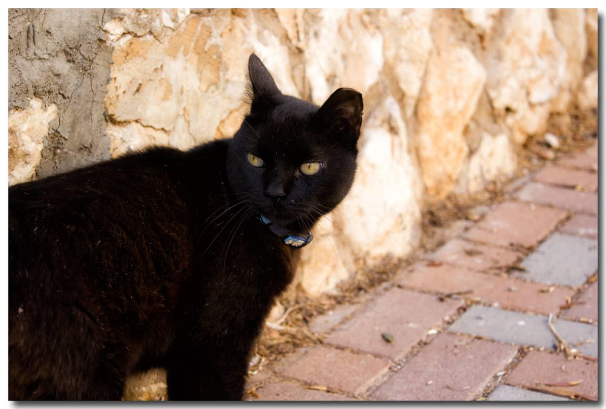original - Жена фоткала кота...