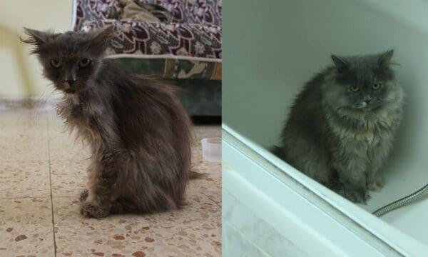 froska before and after 600x360 - Пять месяцев спустя