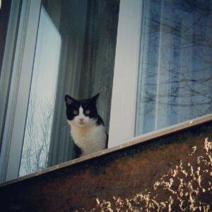 Знает ли этот кот, чего он хочет?