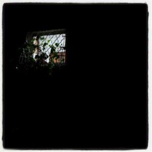 IMG 20120725 220027 300x300 - Тень на плетень