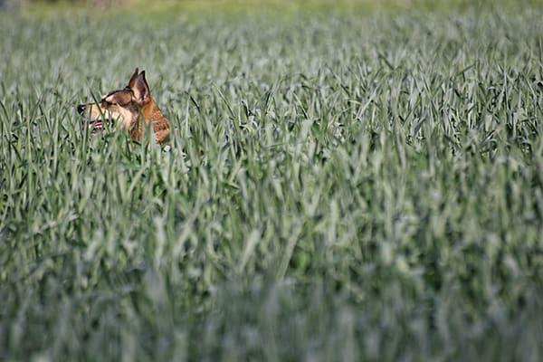 IMG 5043 - Почему некоторые люди боятся собак?