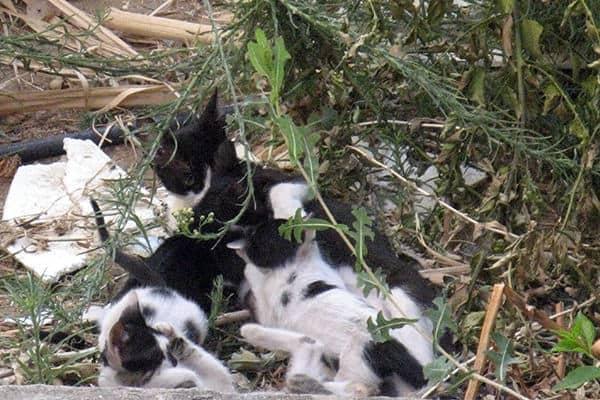 Пуча всегда сразу сбегала, когда кто-то из ее котят начинал плакать