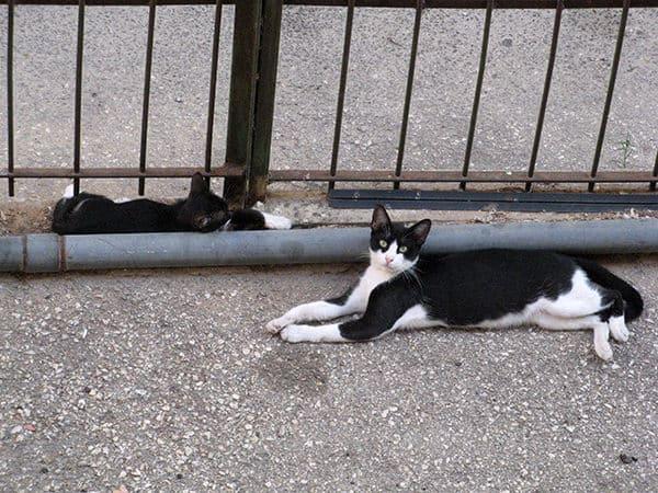 Котята подросли, но пока еще нуждаются в защите