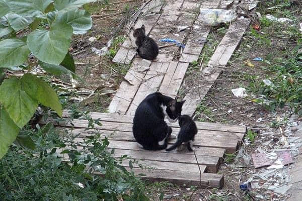 Первые котята